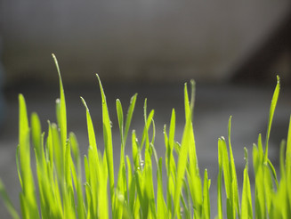 Dicas e cuidados para manter a grama impecável no calor