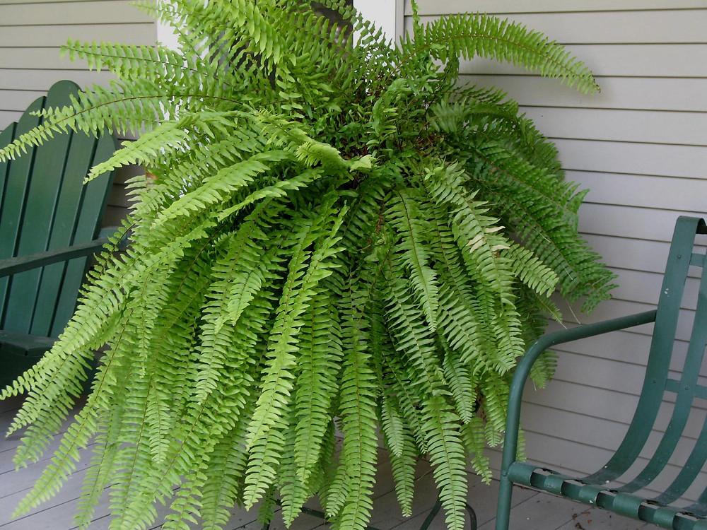 planta brutatec