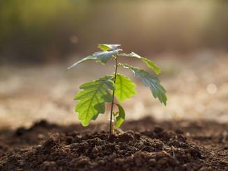Confira o passo a passo para plantar uma árvore do jeito certo!