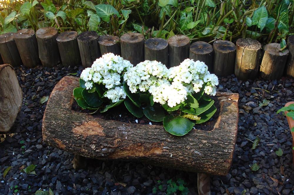 vaso de tronco brutatec