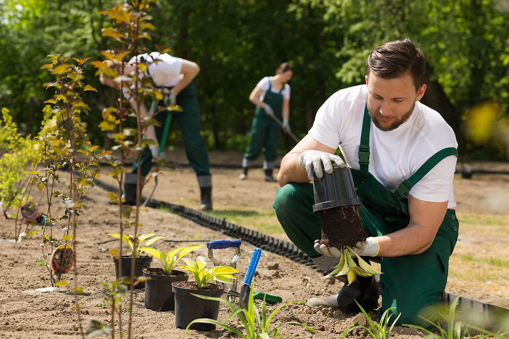 brutatec seja um jardineiro