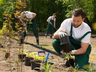 Abra uma empresa de jardinagem e seja seu próprio chefe