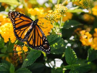 Como manter o jardim sempre lindo? Confira 6 dicas infalíveis!