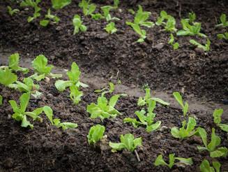 Descubra como começar uma plantação e obtenha alto lucro