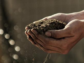 Quais são os tipos de terra para plantas? Descubra as diferenças!
