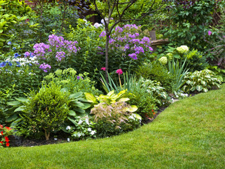 Cinco dicas simples para cuidar do seu jardim