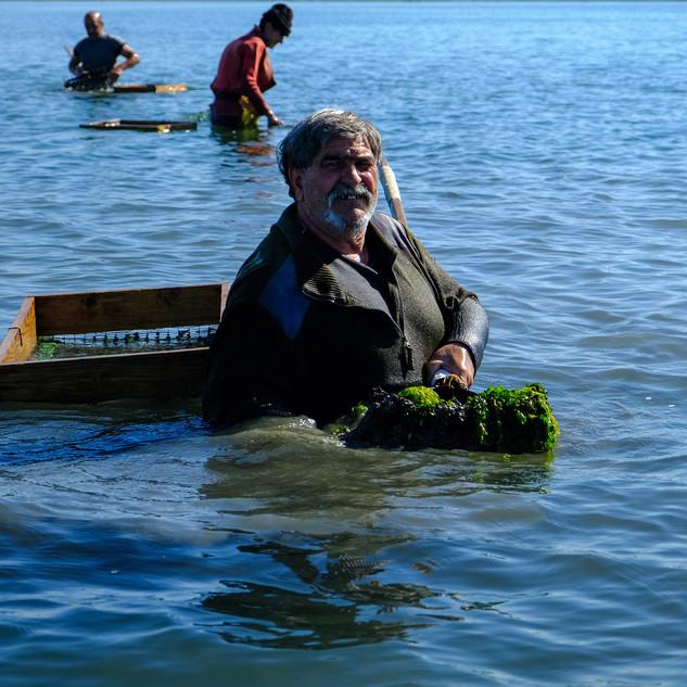 Gli Arsellari della Laguna di Santa Gilla