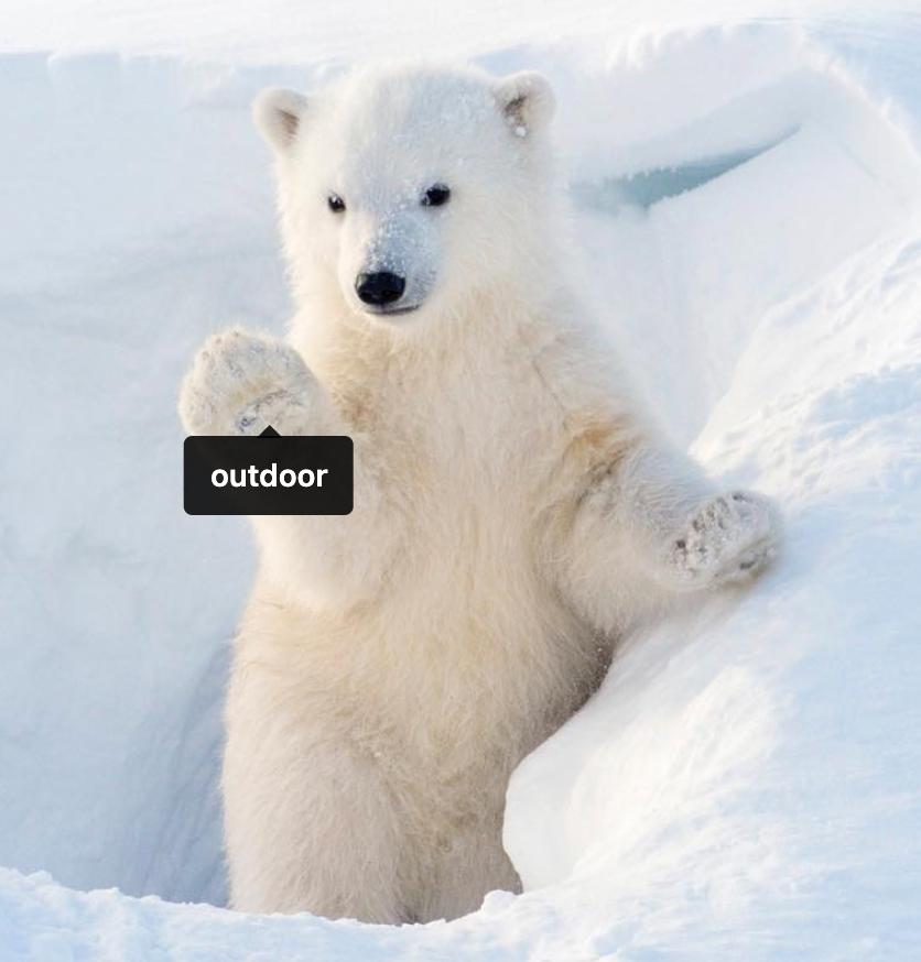pbear cub