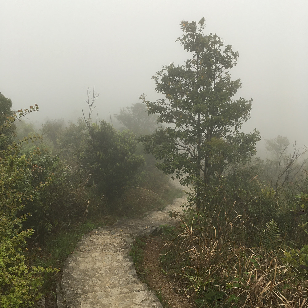 A Typical Foggy Day in Spring at Pat Sin Leng