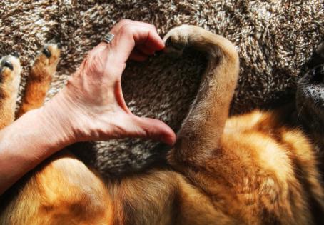 """""""Ein Tier ist das einzige Lebewesen das dich mehr liebt als sich selbst""""."""