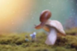 Tha snail on the mushroom. After the rai