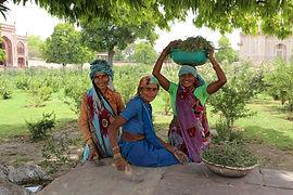 Post-harvst India