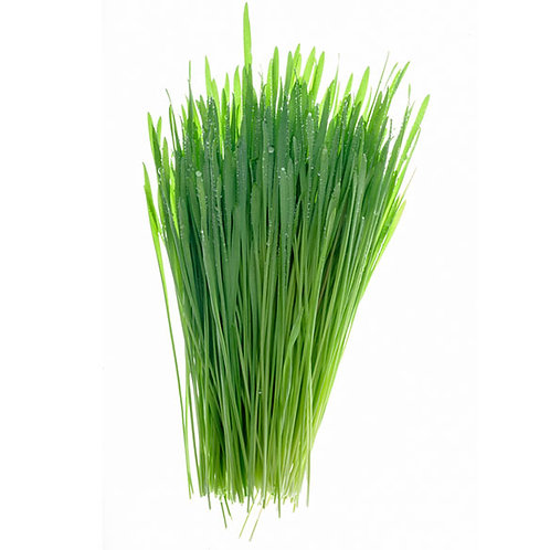 1lb. Wheat Grass