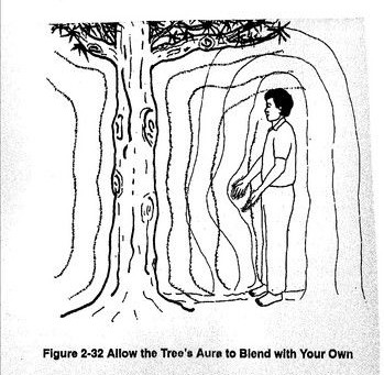 Упражнение за сърдечната чакра с дърво