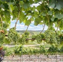 wine-4416111_1920.jpg