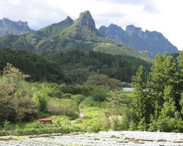 金鶏山(夏)