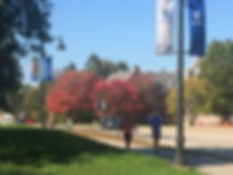 UNH Fall Colors.jpg