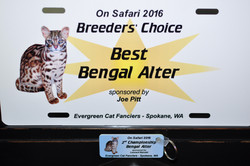 Benali at On Safari 2016 - Breeders Choice BEST Alter -  2nd Best Alter Judges