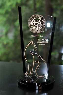 CFA 15th BEST CAT - 2019.JPG