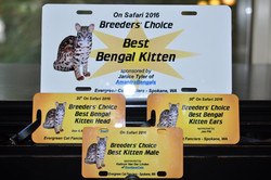 Sasquatch at On Safari 2016 - Breeders Choice Best Kitten, Best Head and Best Ears