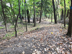 South Trail Wooded Walk