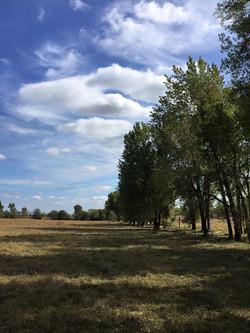 South Cottonwood treeline