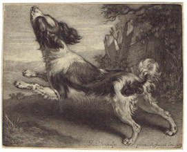 A Spaniel leaping to the left