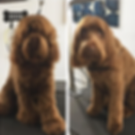 dog groomer costa mesa.png