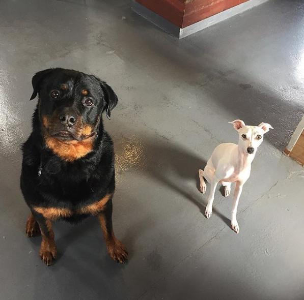 Dog groomer costa mesa pennys pup wash roccos bath walk solutioingenieria Image collections