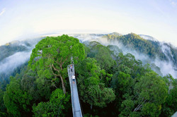 Ulo Temburong Canopy Walk
