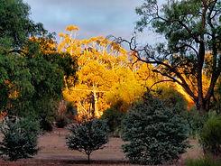 Tarnagulla Oval - Autumn.jpg