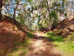 Tarnagulla Walking Track 2.jpg