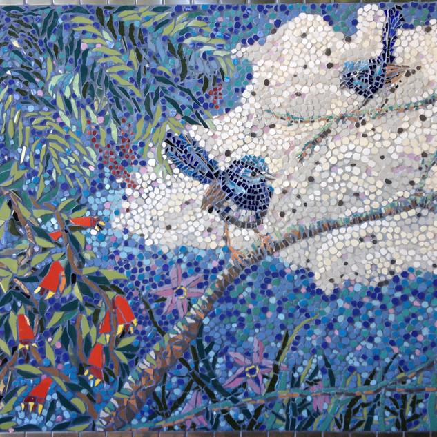 blue wrens .jpg