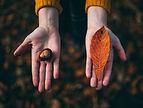 Jetons d'automne