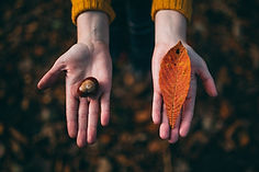 open handen met kastanje en blad