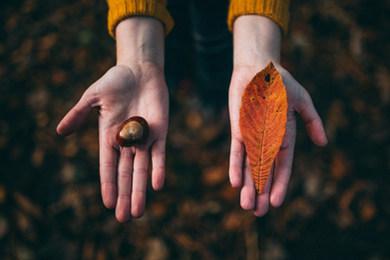 Cadeau d'automne / Fall Tokens
