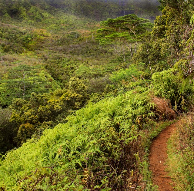 Kauai Hike