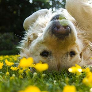 summer-dog-2