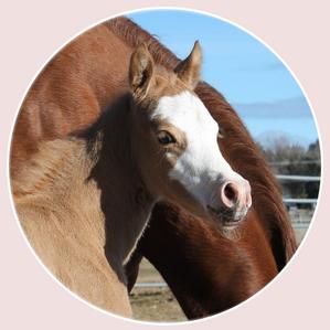 Midas Foal 4.png