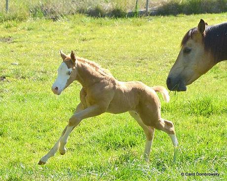 magnum-foal2