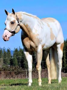 precision-horse-training-Midasized2.jpg