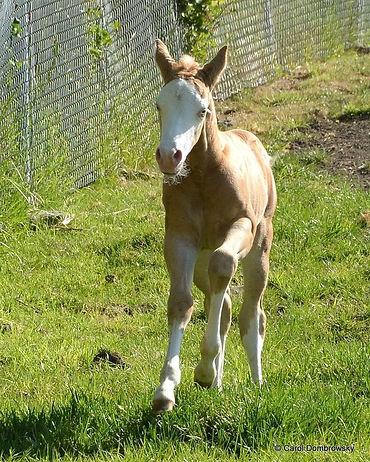 magnum-foal