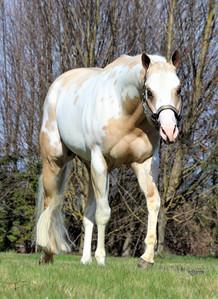 precision-horse-training-Midasized8.jpg