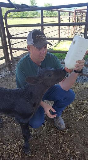 Heath feeding cow.jpg