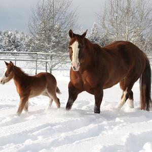 Midas Foal 6.jpg