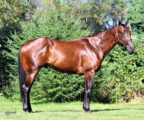 precision-horse-training-kool-kingdom.jp