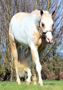 precision-horse-training-Midasized7.jpg