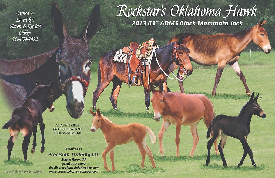 Rockstar_Oklahoma_Hawk_stallion.jpg