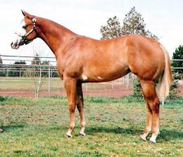 Midas Foal 14.png