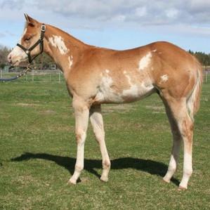 Midas Foal 9.jpg